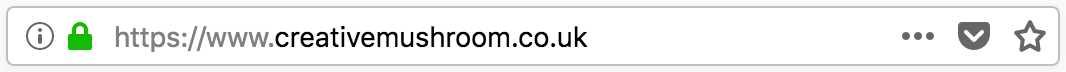 Creative Mushroom URL in search Bar